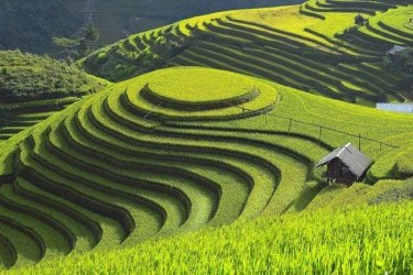 Vietnam-sapa-terraced-paddy